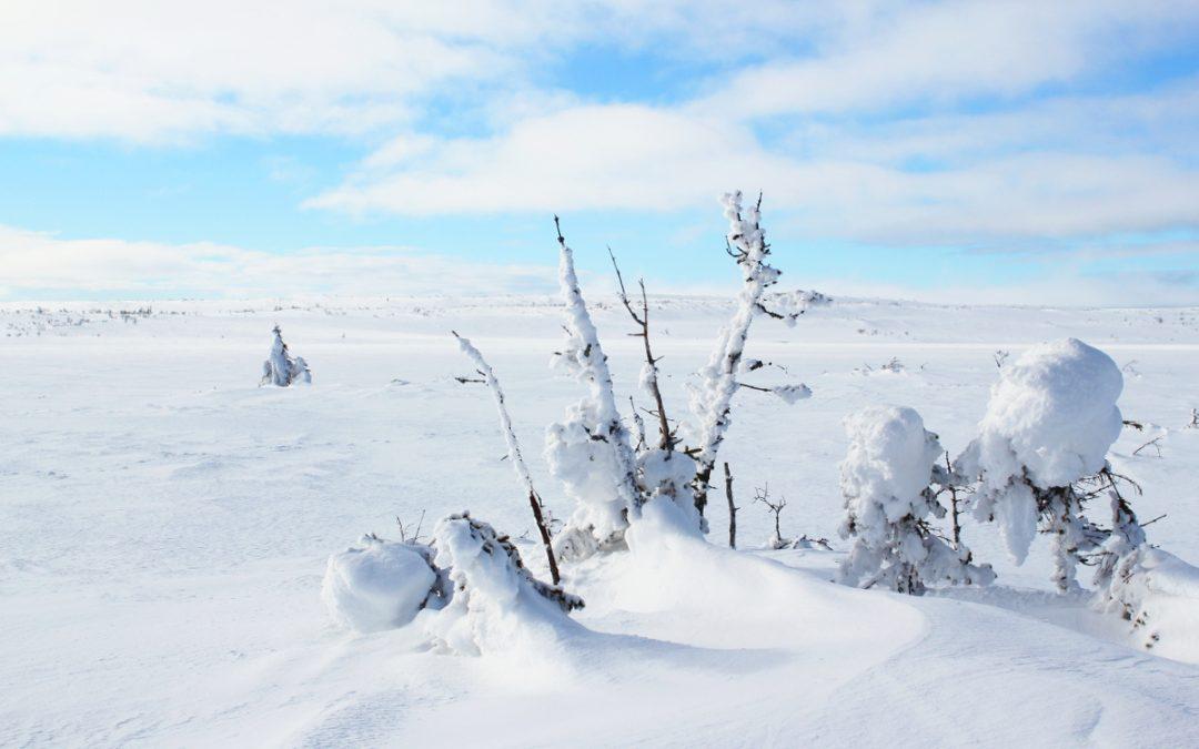 5 orsaker till att besöka Fulufjället vintertid / 5 reasons to visit Fulufjället in the vinter
